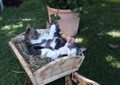 Bauernhofkatzen haben es fein